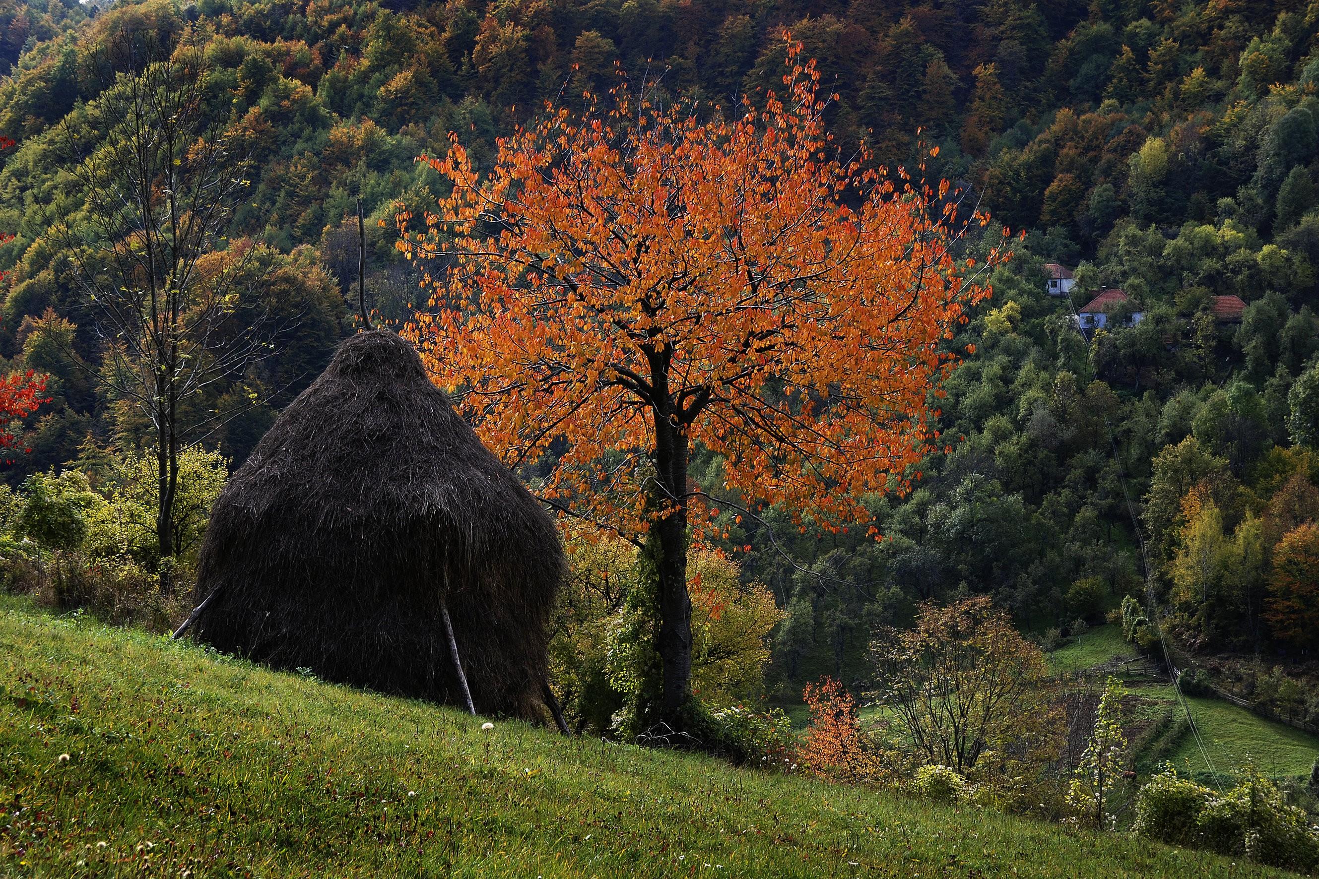 Jesen, Donji Taor